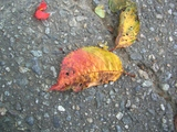 落ち葉秋の色2