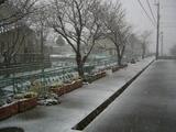 なごり雪090326