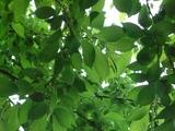 緑の重なり