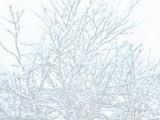 雪の枝造形美