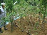 千本桜の里植樹苗木