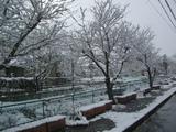 今日久々の雪