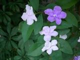 においがいい花