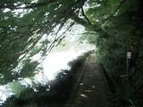 木陰の小径
