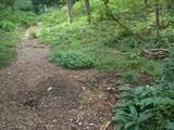 キノコの森現地