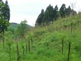 昨年の植樹場所