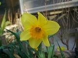 ようやく春の一輪