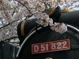 機関車と桜