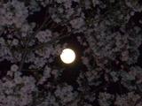 満月とともに
