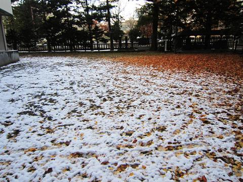 お散歩(冬)