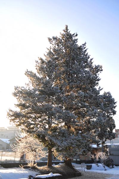 公園の樹_5876