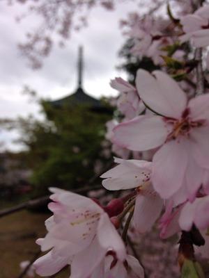2015-04-04-hana1