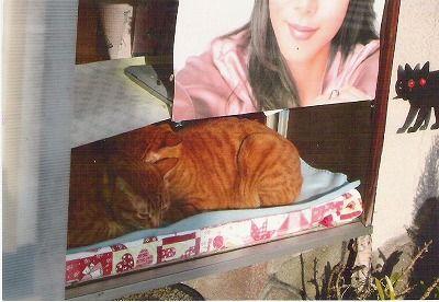 029-cats