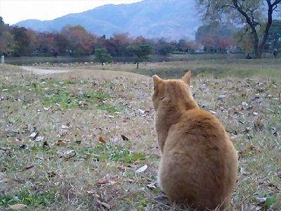 027-cat