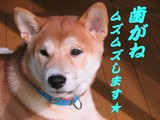 コタロー 0929
