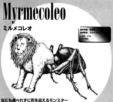 myrmecoleo