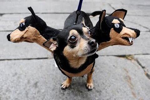 -HalloweenDog