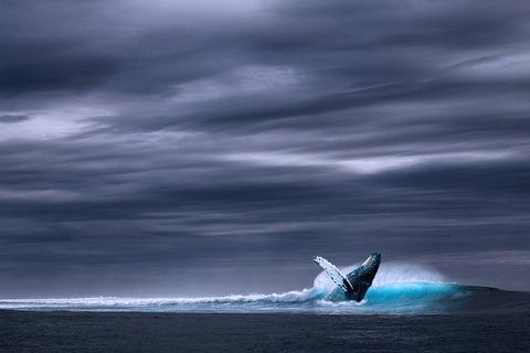 ocean-2051760_640