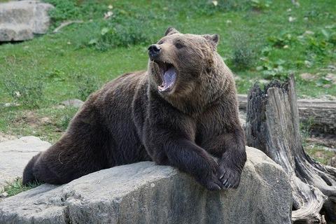 brown-bear-912444_640