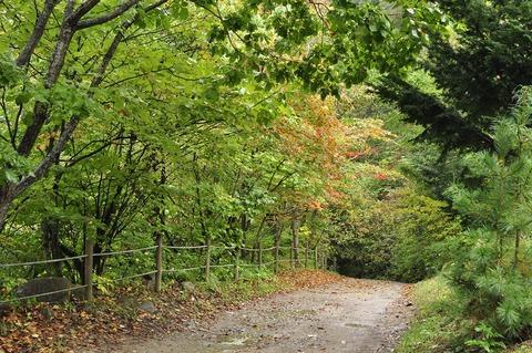 autumn-1256951_1280