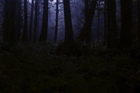 dark-forest-4395986_640
