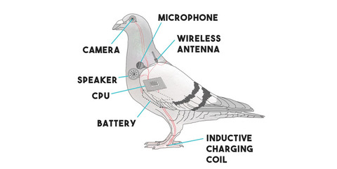 pigeon-drone