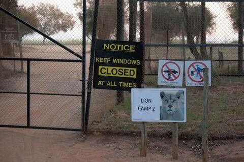 Lion-Park-in-Johannesburg