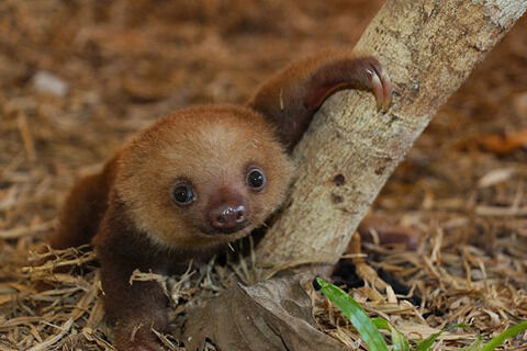 sloth05