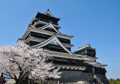 cherry-blossoms-301251_960_720