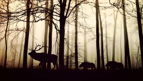 forest-1818690_960_720