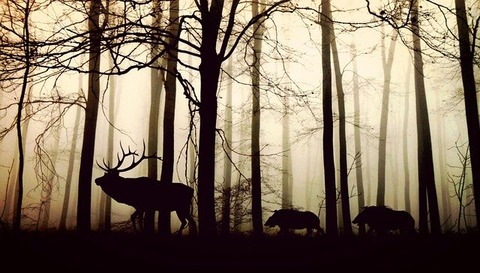 animals-1818690_640