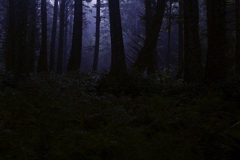 dark-forest-4395986_640 (2)