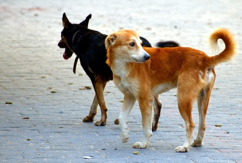 dogs-2848353_640