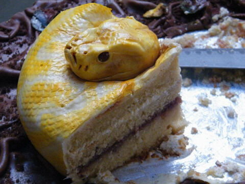 snake-cake-3