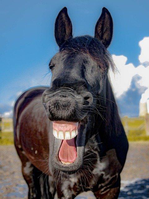 horse-1844792_640