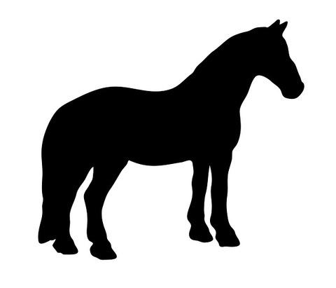 horse-163558_640