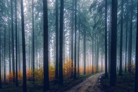 landscape-1858602_640