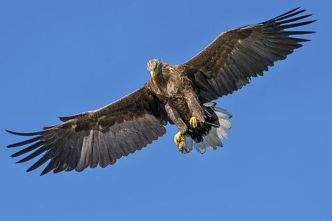 eagle-1753002_640