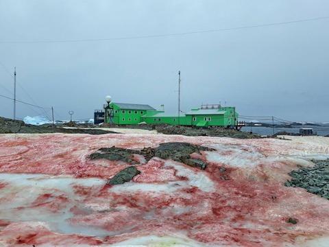 antarctica-blood-red-snow-1024x768