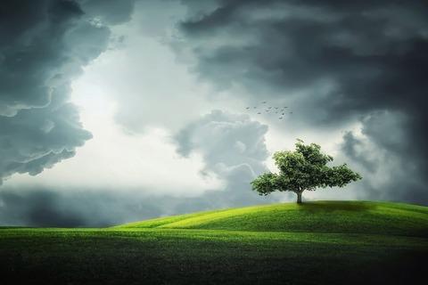 tree-832079_1280-1024x682