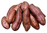 鹿児島県産 農家直送 完熟蜜芋 訳あり安納芋(あんのういも)5kg 規格外
