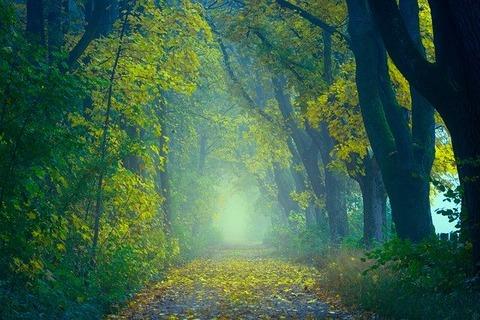 light-3692751_640