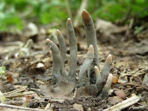 dead-man-s-fingers-1