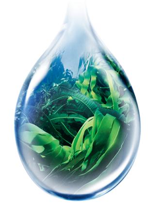 ラサーナシャンプーに含まれる海藻エキス