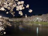 弘前公園ー夜桜�