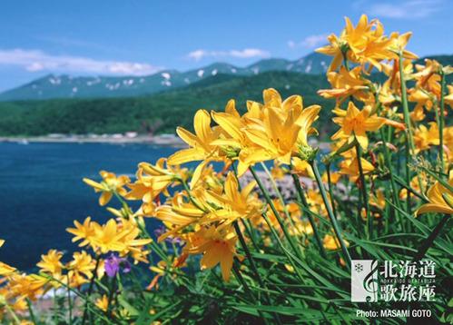 s_flowers