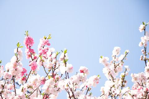 桜0321-2
