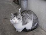 岡製麺所0105マスコット猫♪