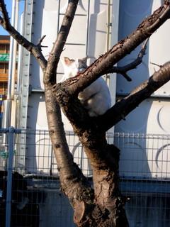 木登り讃太1208