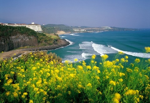 韓国の済州島